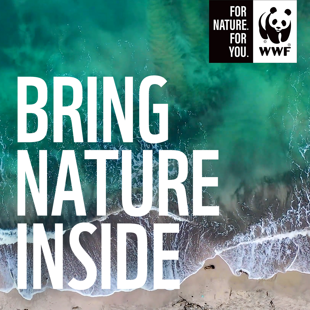 WWF SA Soundscape Playlist Brings Nature Inside